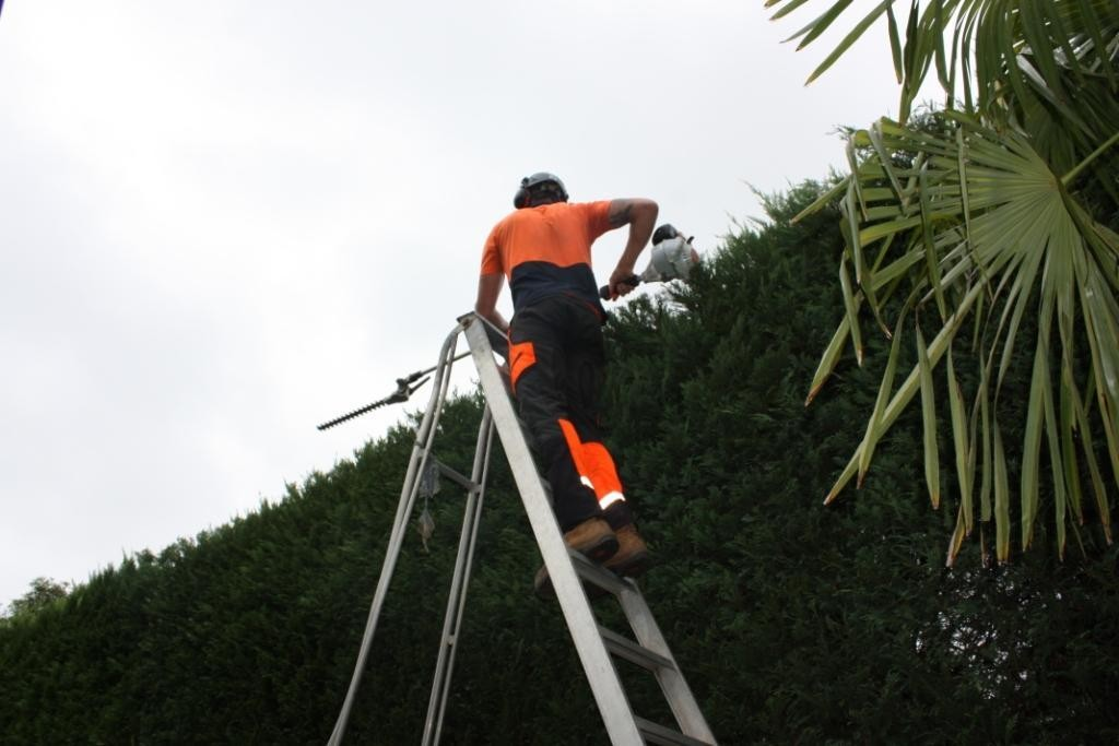 tree pruning st ives