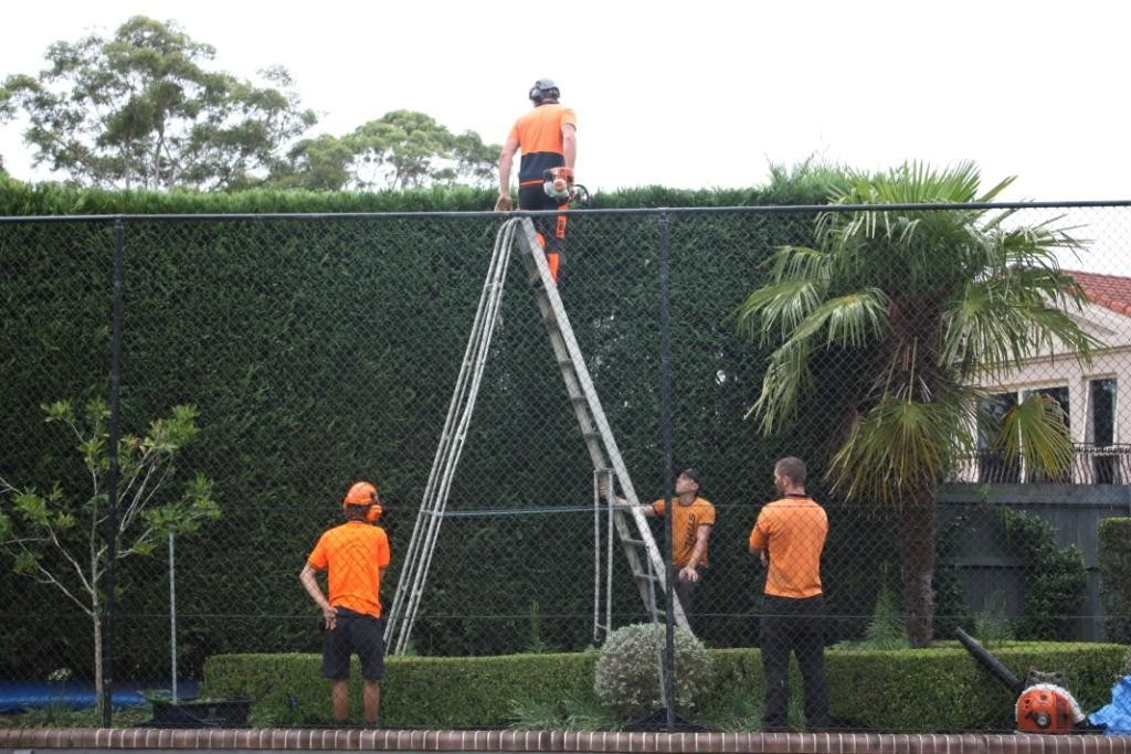 tree pruning pymble
